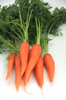 人参 ニンジン にんじん 野菜 植物 食べ物 葉付き オレンジ 沢山 白バック 緑 みどり