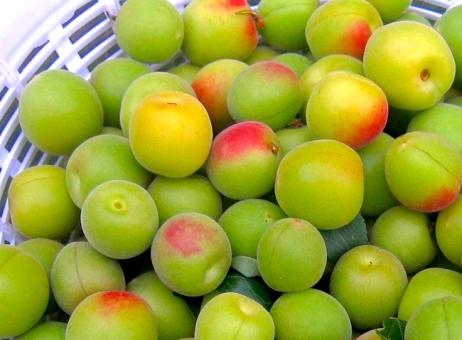 小梅 梅 おにぎり お弁当 梅干 梅漬け 果実 完熟 おむすび 弁当 梅酒 青梅 フルーツ