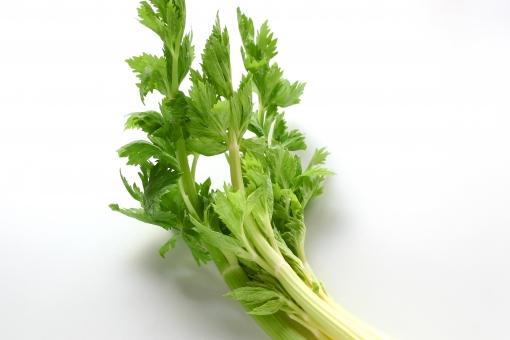 セロリ 緑黄色野菜 野菜 食べ物 食物 春 セリ 食物繊維 食材 葉 春 コレステロール ビタミン ミネラル 便秘 健康 栄養 植物 生野菜 緑 美容 茎 白バック 料理 クッキング 食事
