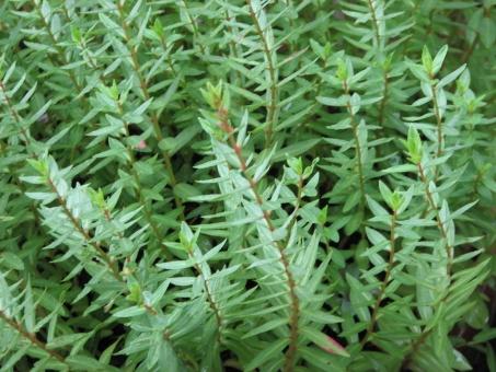 新緑 若葉 緑 庭 雨上がり にわ 草花 新芽 勢い いきおい 生命力 成長力 みどり 緑色 植物 やすらぎ 安らぎ