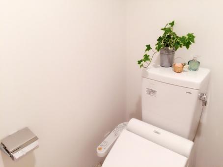 トイレ お手洗い 便座 タンク トイレットペーパー アイビー ヘデラ 観葉植物 植物 個室 インテリア 香水 便器 風水