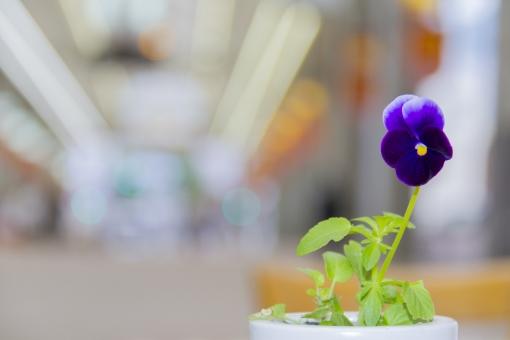 アーケード 商店街 花 花瓶 植物