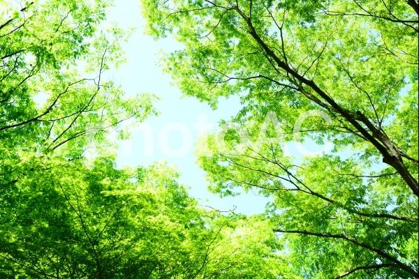 新緑 エコイメ-ジ 5の写真