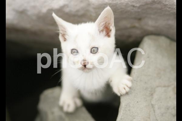 岩猫兄弟2の写真
