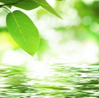 水辺 水 せせらぎ キラキラ 葉っぱ 木の葉 葉 自然 風景 植物 ジューンベリー アップ 夏 春 森 森林 緑 グリーン 涼 涼しげ 涼しい クール みずみずしい フレッシュ リラっクス リラクゼーション 木漏れ日 フレーム 背景 バックグラウンド テクスチャ エコ エコロジー 瞑想 静かな 落ち着く アウドドア コピースペース テキストスペース 木 樹木 ヒーリング 森林浴 光 新緑 若葉