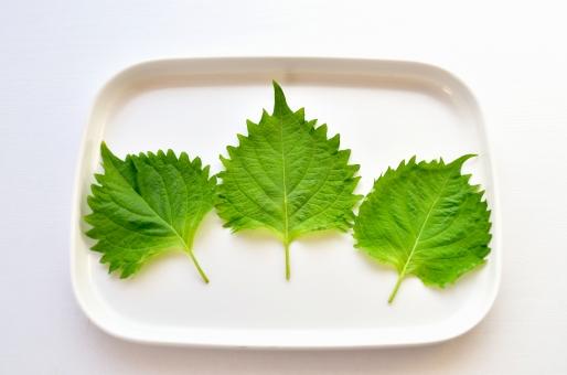 野菜 紫蘇 大葉 おおば オオバ 緑の野菜 青い葉 シソの葉 しその葉 野菜 ベジタブル