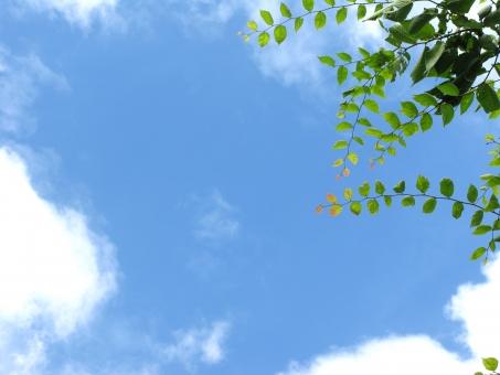 青空 木陰 木の枝 葉っぱ 晴天 空 天気 背景 緑 ブルー フレッシュ リフレッシュ 環境 エコ 爽やか 爽快 すっきり 晴れ