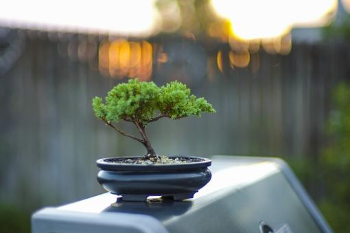 景色 風景 眺め 景観 情景 光景 見晴らし 全景 眺望 緑 外 屋外 室外 庭 ガーデン テラス ベランダ 植物 植木 盆栽 鉢 垣根 ぼんさい 栽培 育てる