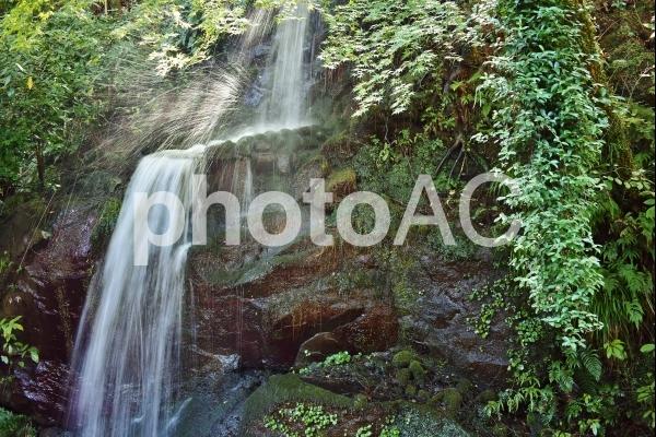 湯河原 万葉公園の写真