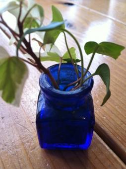 観葉植物 葉 葉っぱ 小瓶 瓶 緑 花瓶 カフェ 窓際 窓辺 かわいい カワイイ ミニ 小さい キュート 落ち着く 癒し 癒される 青 青い瓶