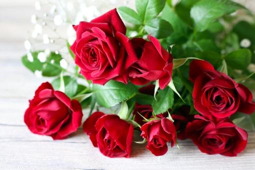 赤いバラの写真