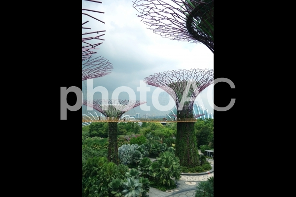 シンガポール ガーデンズバイザベイ スカイウェイ スーパーツリーグローブの写真
