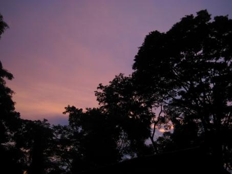 夕暮れの熱帯林の写真