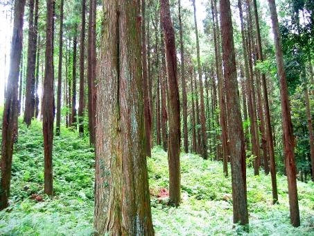 杉林の中の写真