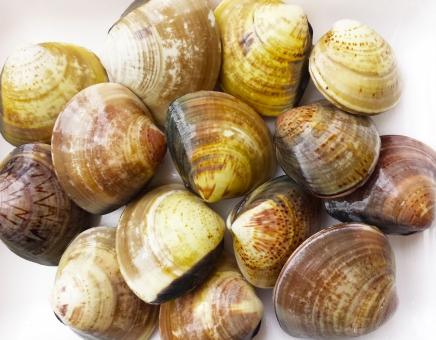 かい 貝 はまぐり ハマグリ 貝殻 貝類 二枚貝 魚介類 海の幸 出汁 テクスチャ バックグラウンド 海岸 潮干狩り 浜辺 食材 食べる 美味しい 砂抜き お吸い物 お味噌汁 おみそしる おすいもの だし 海水 すなぬき 和食