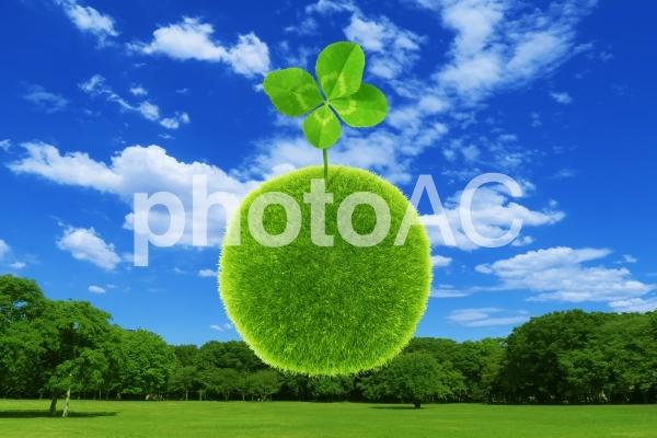 夏の青空と緑の木と四葉のクローバーの写真