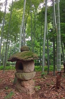 庭園 日本庭園 竹林 banboo 孟宗竹 植物 自然 緑 閑静 憩いの場所 静寂 和風 和様式 風景 景色 竹 石燈篭 建造物 構造物 石造 灯籠 灯ろう 灯篭 和様建築