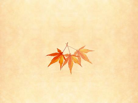 モミジ もみじ 紅葉 椛 かえで カエデ 楓 葉 植物 自然 秋 余白 背景 背景素材 バックグラウンド テキストスペース コピースペース 暖色 空間 質感 テクスチャ 赤色 赤 季節 並べる 整列  ベージュ 重なる