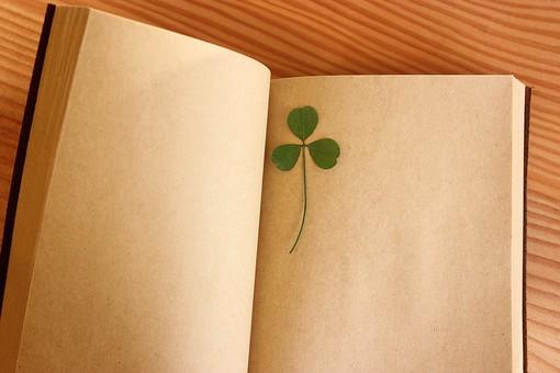 押し花 花 ドライフラワー 小花 植物  美しい かわいい 繊細な 本 ブック 紙 ノート しおり 挟む はさむ 開く クローバー