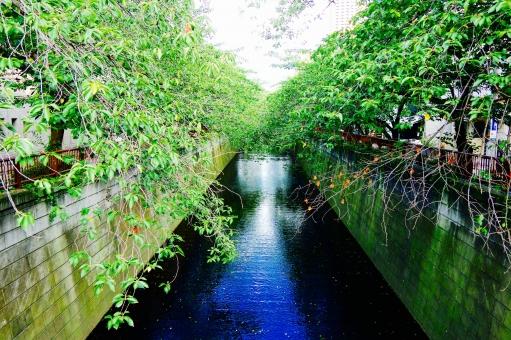 目黒 中目黒 Meguro Nakameguro 東京 川 Tokyo tokyo TOKYO River 緑 青 Green Blue 水 木 並木 Tree 流れる