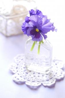 ビオラ すみれ スミレ パンジー 花瓶 瓶 レース 紫 小物 雑貨 白 さわやか 爽やか 可憐 可愛い かわいい 花びら インテリア 小物 雑貨 小物入れ 壁紙 花 背景 背景素材 明るい 冬 春