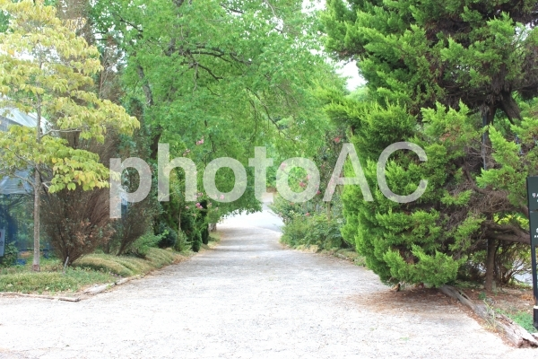 新緑の道の写真