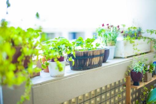自然 風景 景色 環境 スナップ 緑 光合成 日光 季節 美しい きれい シルエット 癒し ガーデニング インテリア 観葉植物 カフェ風 温室 栽培 鉢 植物 草花 おしゃれ 並べる アート