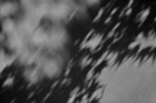 田中苑の茶室の壁に映ったモミジの写真