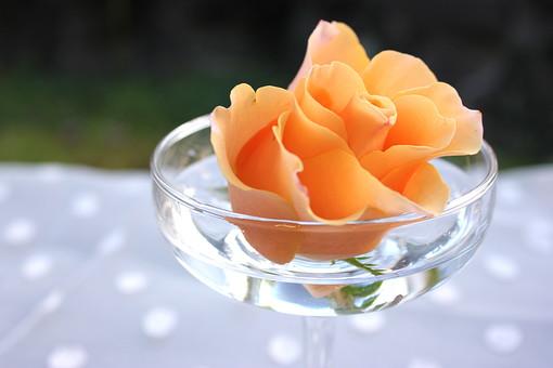 花 植物 薔薇 ばら バラ オレンジ 綺麗 美しい 切花 切り花 花びら フラワーアレンジメント グラス ワイングラス 浮かぶ