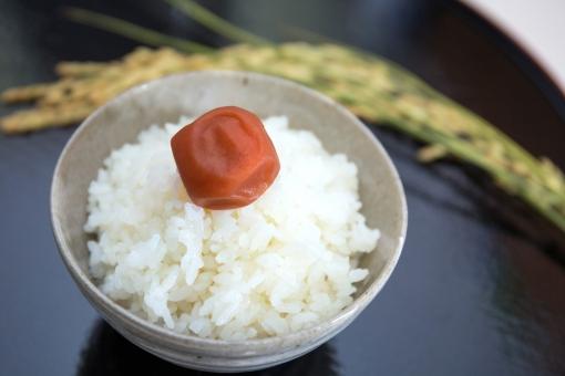 米 ご飯 ごはん 茶碗 お茶碗 白米 お米 コシヒカリ 食べ物 料理 和食 和風 フード 食物 日本食 和風料理 日本 和 食事 農業 稲穂 稲 梅干し 梅 お盆 盆 ぼん 新米 イメージ クローズアップ