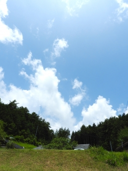 田舎 田舎の夏 夏 いなか 地方 初夏 夏空 夏色 木立 木 長い 空 雲 背景 素材 材料 自然 7月 8月 縦 スペース 余白 植物 風景 家 住宅 家屋 屋外 外 はれ 晴れ 晴天 緑 グリーン きれい 涼しげ