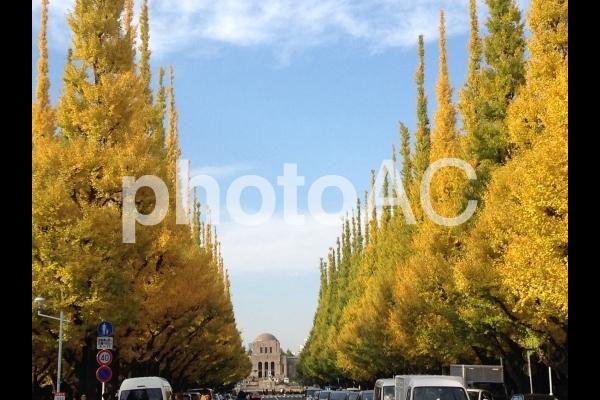 神宮外苑の写真