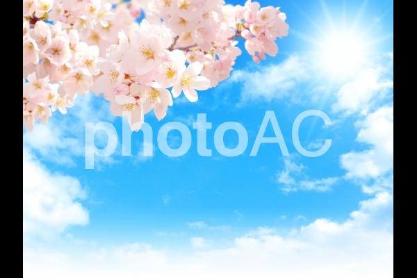 psd桜202005の写真