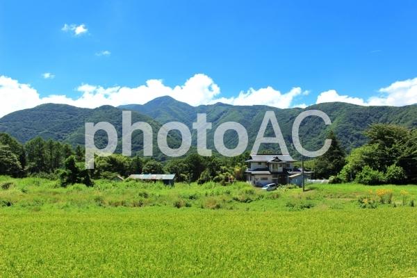 日本の夏 美しい山里3の写真