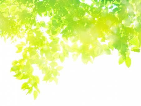 新緑の木漏れ日イメージ-抽象背景素材の写真