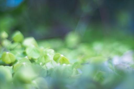 草1の写真