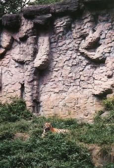 satochi サトチ 多摩動物公園 たまどうぶつこうえん 動物園 どうぶつえん ドウブツエン zoo 多摩 たま タマ tama チョウセントラ 虎 寅 とら トラ tiger
