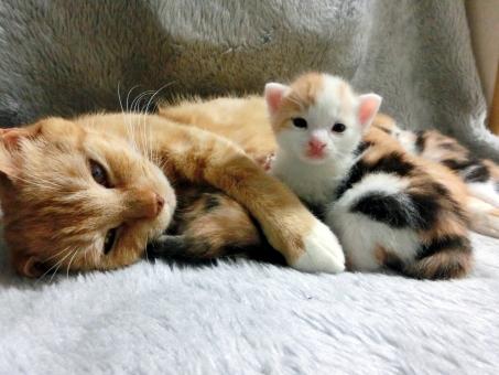 授乳中のネコ4の写真