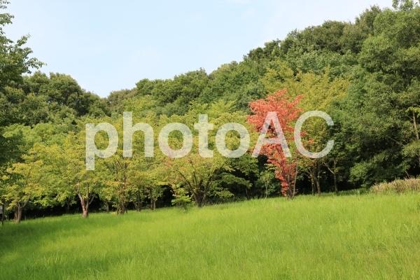 愛知 緑地 公園 空 芝 緑 夏 日中 ハイキング 散策 夏空の写真
