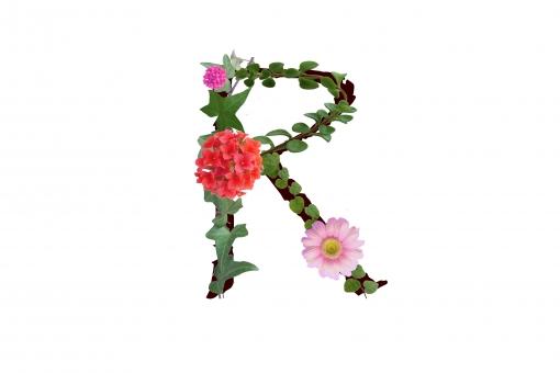 アルファベット ローマ字 英文字 文字 植物 花 グリーン ガーベラ カランコエ テクスチャ 素材