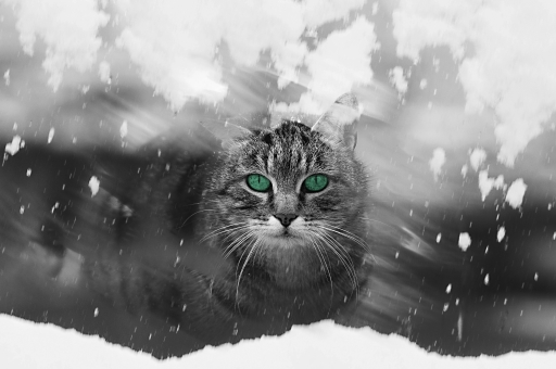 冬 風景 雪 雪景色 動物 生き物 ネコ ねこ 猫 子猫 硝子 ガラス ガラス窓 窓 覗く 覗きこむ かわいい 顔 正面 屋外 外 野外 建物 映り込み 寒い 寂しい 一人ぼっち