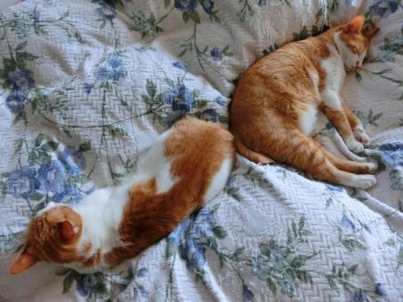 ネコ 猫 親子 昼寝 爆睡 寝相 睡魔 睡眠 寝る 眠る ベッド リラックス くつろぐ 寛ぐ 安心感 家猫 飼い猫 室内猫 茶白 可愛い ほのぼの 癒し 安心感 仲良し 絆 にゃらん親子 動物 ペット CAT