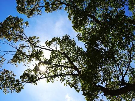 日陰 木 木の下 太陽 日 大きな木 散歩 木陰 妖精 暖かい あたたかい 雲 青空 公園 光 太陽の光 サンシャイン sunshine 空気 綺麗 リラックス のんびり 日和 気持ちいい ストレス 発散 影 陰 かげ 見上げる 春 夏 秋