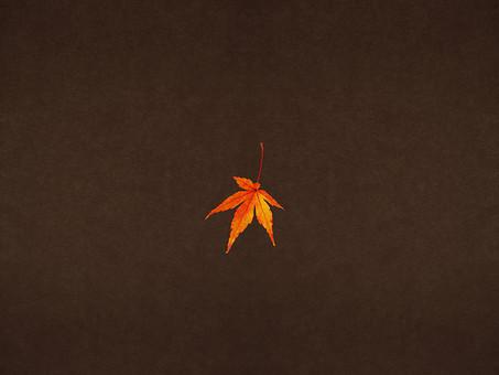 モミジ もみじ 紅葉 椛 かえで カエデ 楓 葉 植物 自然 秋 余白 背景 背景素材 バックグラウンド テキストスペース コピースペース 暖色 空間 質感 テクスチャ 茶色 1枚 赤色 赤 季節  一枚
