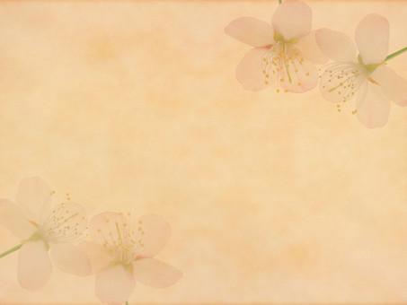 花 桜 サクラ さくら 花びら 植物 自然 春 空間 余白 テクスチャ 質感 背景 背景素材 バックグラウンド テキストスペース コピースペース 枠 フレーム 暖かい ナチュラル 花柄 花模様 桜の花 桜柄 ベージュ 和 和柄 飾り枠