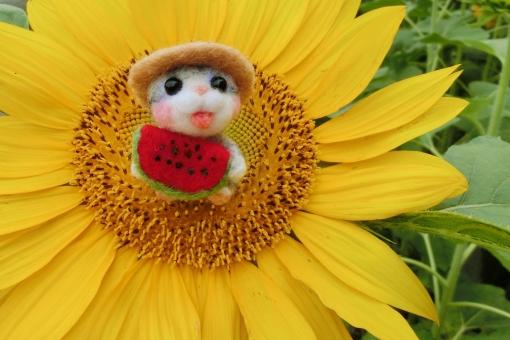 ヒマワリ 向日葵 ひまわり 花 夏 黄色 イエロー 花びら 季節 スイカ ネコ 猫 マスコット 小物 暑中お見舞い 残暑見舞い 植物 明るい 元気