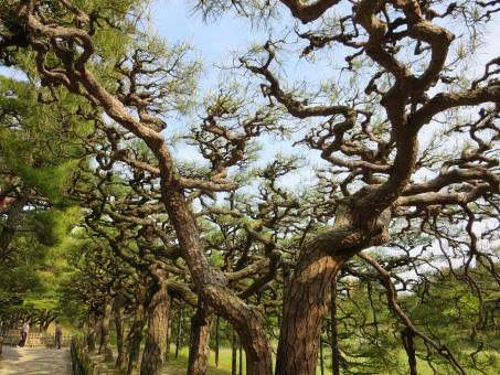 四国 香川 香川県 栗林公園 公園 日本庭園 高松 庭園 高松市 和 和風 日本 景色 自然 風景 庭 観光 観光地 名所 観光名所 緑 みどり グリーン 林 森林 植物 木 晴れ 空 松 松の木
