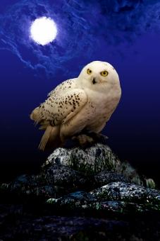 白フクロウ シロフクロウ シロ梟 白梟 ファンタジー 合成 夜空 雲 闇夜 月 月夜 風景 鳥 動物 幻想的 不気味 ロマンティック 物語 イメージ 昔話 魔法使い 魔女 ハロウィン Halloween HALLOWEEN 行事 イベント 背景 岩 石 岩山