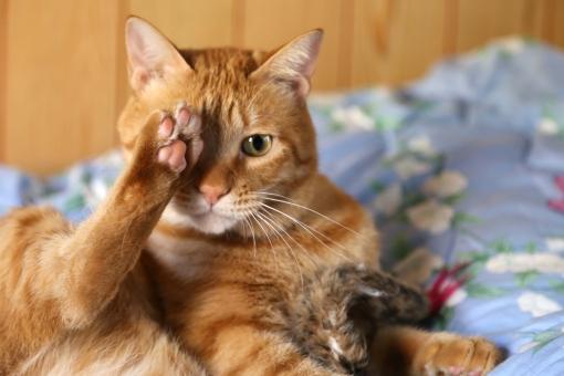 猫 ねこ ネコ にゃんこ 寝る子 neko 視力検査 10月10日 目の愛護デー 可愛い 愛おしい 愛らしい ラブリー キュート 家族 ペット 癒し モフモフ ほんわか 猫の日 肉球の日 猫ブーム 右 左 下 上 目 右目 左目