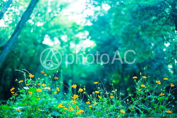 森の中の黄色い花の写真